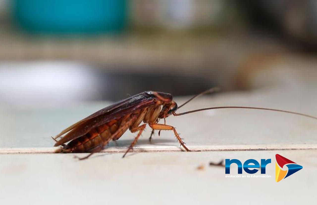 cucaracharesistente