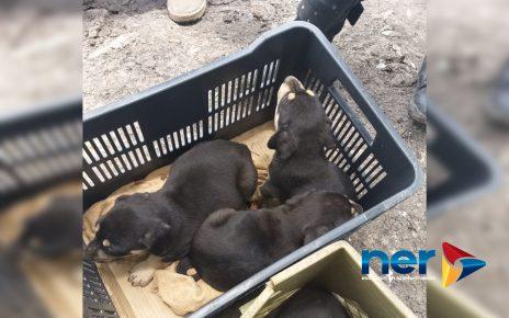 perritos en adopcion
